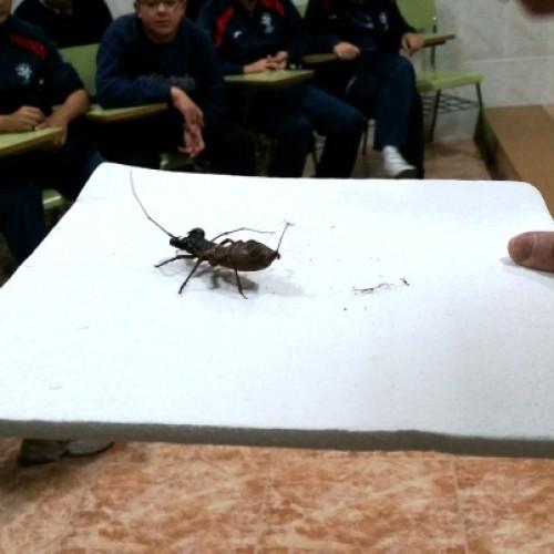 """Reseña sobre el Taller """"descubre los insectos"""""""