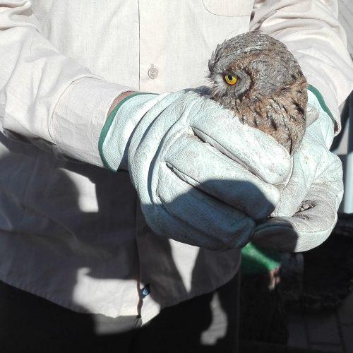 CREA -Centro de recuperación de especies amenazadas- (3ºEPO)